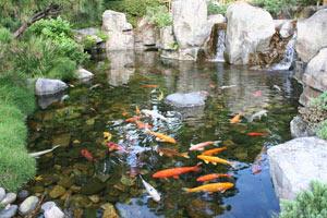 koi pond liners